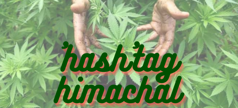Himachal Pradesh finally set to legalize cannabis cultivation to boost the economy